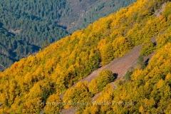 Estrela Mountain's Autumn