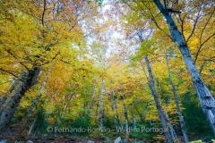 Estrela Mountain´s forest