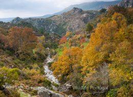 Outono na Serra do Alvão