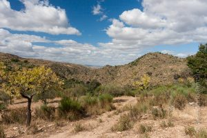 Faia Brava Reserve