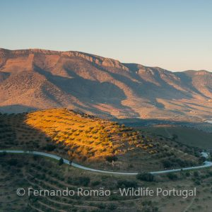 Douro Internacional Nature Park