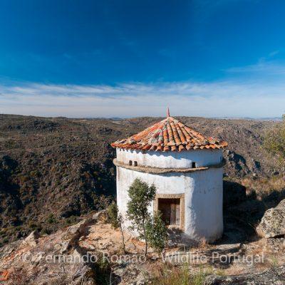 Dovecote at Faia Brava Reserve