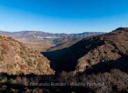 Douro Internacional Natural Park