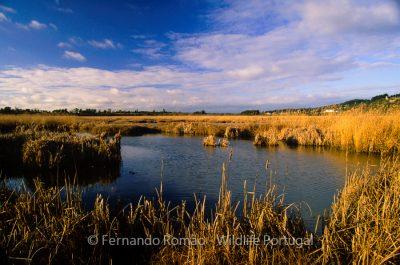 Taipal wetland