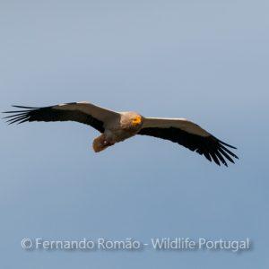 Hide for vultures