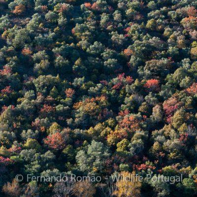 Outono no Douro Internacional