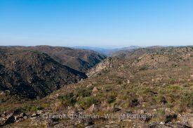 Côa Valley and Faia Brava Reserve