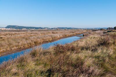 Mondego Estuary