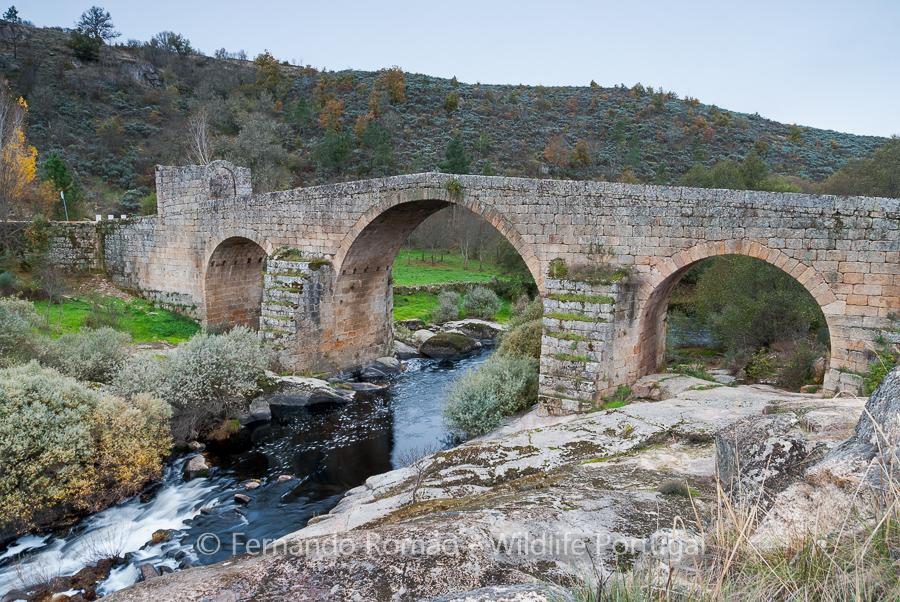 Sequeiros medieval bridge