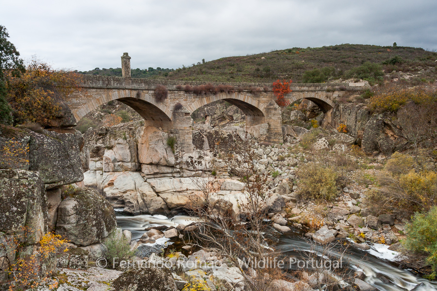 Old bridge over Côa River