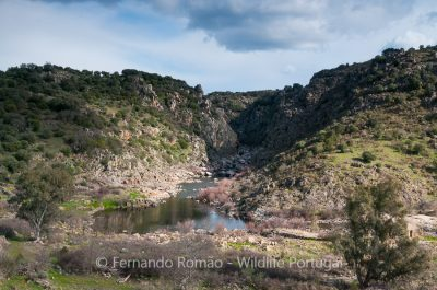 Erges River canyon