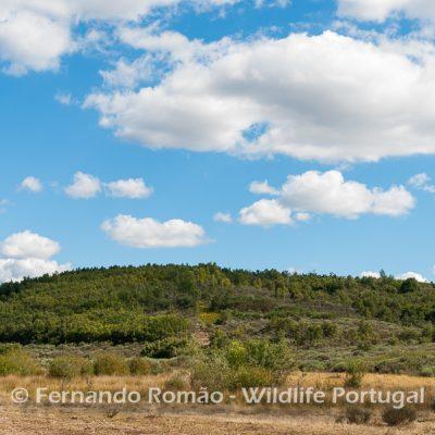 Malcata Natural Reserve