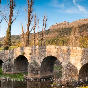 Ponte da Portagem