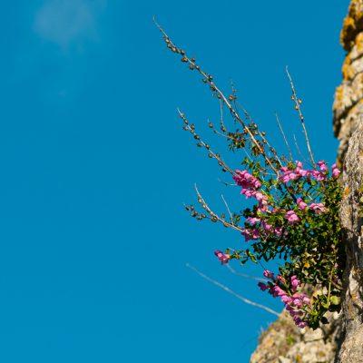 Nature Tours & Wildlife Photography