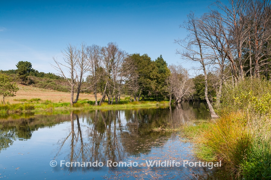 Côa River - Bosques e prados da Malcata