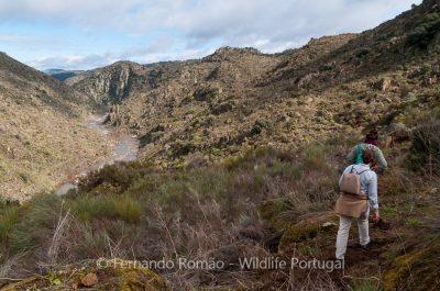 Faia Brava Hiking