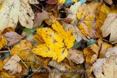 Folhas caídas