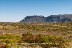 Upper Plateau