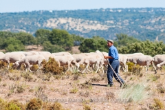 Shepherd at Tejo Internacional Natural Park