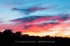 Sunset colours at Tejo Internacional Nature Park